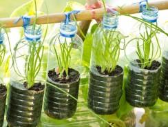 10 Ways To Do Vertical Gardening