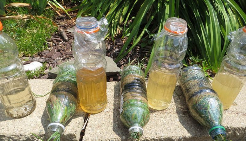 How to Make a Water Filter From Trash